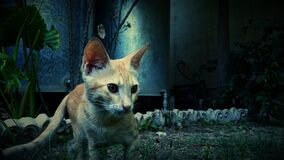 Photography of Orange Cat Near Green Plant Royalty Free Stock Image