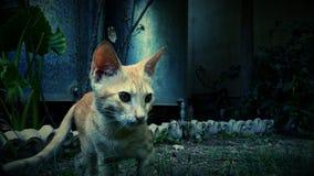 Photography of Orange Cat Near Green Plant Royalty Free Stock Image