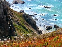 Photography of Orange-and-yellow Petaled Flowers on Cliff Near Body of Water at Daytime Stock Image