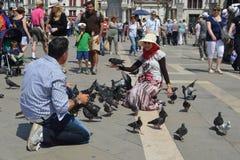 Photography pigeons stock photo