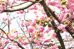 Photography of Pink Flowers on Tree Stock Image