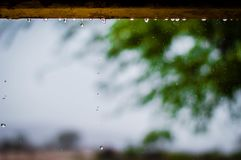 Photography of Rainy Weather With Trees Royalty Free Stock Photo