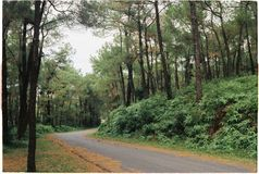 Photography of Road Between Forest Stock Photos