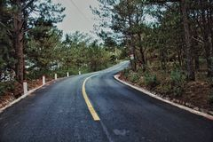 Photography of Roadway Surrounded by Trees Royalty Free Stock Photo