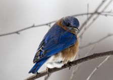 Photography of Small Blue and Brown Bird Stock Photos