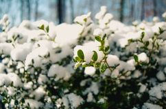 Photography of Snow on Plants Stock Photography