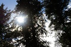 Photography of sun in trees. Stock Photo