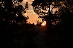 Photography of sunset through tree and grass Royalty Free Stock Images