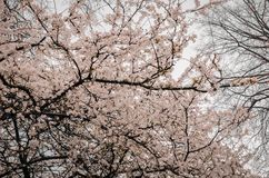 Photography of Tree Branches With Flowers Stock Photos