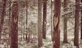 Photography of Tree Trunks During WInter Stock Image