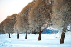 Photography of Trees During Winter royalty free stock photo