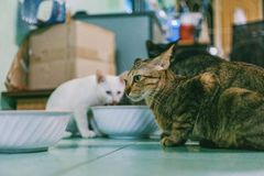 Photography of Two Cats Stock Photography