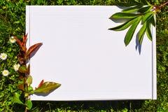 Photograpjy utformat materiel, digital mapp f?r modell Tom fyrkant f?r konstarbete med gr?nt gr?s och bakgrund f?r vita blommor f royaltyfri bild