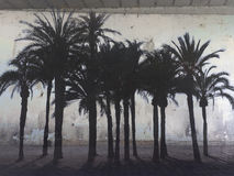 Photomontage de uma parede resistida com as palmeiras na praia Foto de Stock