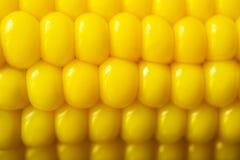 Boiled corns Stock Photos