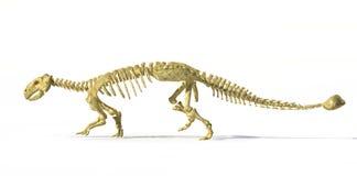 Photorealistic τρισδιάστατη απόδοση του πλήρους σκελετού ενός Ankylosaurus. Στοκ εικόνα με δικαίωμα ελεύθερης χρήσης
