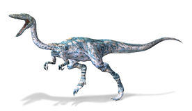 Photorealistic 3 D rendering of a Coelophysis. Stock Image