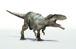 Photorealistic 3 D rendering of a Giganotosaurus. Stock Images