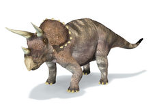 Photorealistic 3 D rendering of a Triceratops. Royalty Free Stock Photo