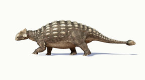 Photorealistic 3D rendering of an Ankylosaurus. Side view. royalty free illustration