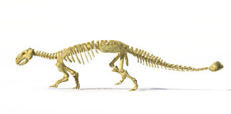 Photorealistic 3 D rendering of full skeleton of an Ankylosaurus. Royalty Free Stock Image