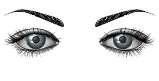 Photorealistic human female eyes close up. Realistic female eye close up, wide open glance with eyebrows Stock Photos