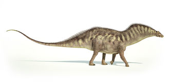 Photorealistic representation of an Amargasaurus dinosaur. Side. Photorealistic and scientifically correct representation of an Amargasaurus dinosaur. Side view Royalty Free Stock Images