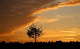 Beautiful summer sunset Stock Photos