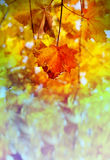 Photos bright autumn background Royalty Free Stock Images