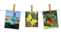Photos with butterfly Royalty Free Stock Images