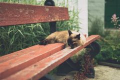 Photos of cats in the Russian monastery royalty free stock image