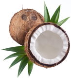Photos of coconuts on a white background. Stock Photos