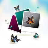 Photos collection Royalty Free Stock Images