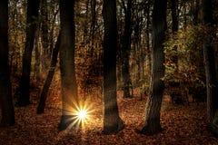 Photos d'automne, arbres illuminés par la lumière artificielle Image libre de droits