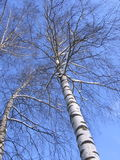 Photos d'hiver : La neige a couvert l'arbre - photos courantes Photographie stock