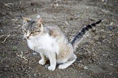 Photos de chat, photos mignonnes de chat, oeil du ` s de chat, les plots réflectorisés les plus beaux Photo libre de droits