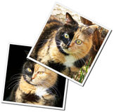 Photos de chats Photographie stock libre de droits