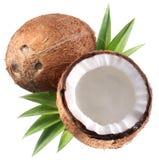 Photos de haute qualité des noix de coco. Image libre de droits