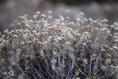 Photos delicate dry flowers Stock Photography