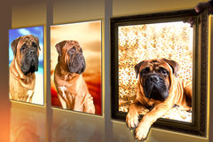 Photos of dog Royalty Free Stock Photography