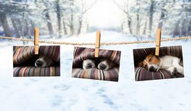 Cute photos of dogs on string in winter Stock Photography