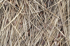 Photos dry grass Royalty Free Stock Photos