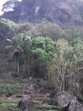 Photos du paysage naturel pendant le matin et la soirée Photo libre de droits