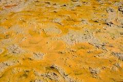 Photos du sol avant de planter le riz Photo stock