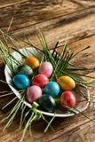 Colorful bright Easter eggs lie on a plate in the grass and green branches. Place for text royalty free stock image