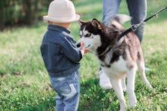 Photos ensoleillées d'une fille heureuse avec un chien Image stock