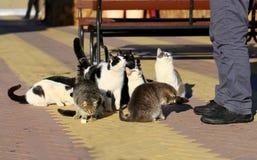 Photos of funny many cats eat. On the veranda cafe stock photography