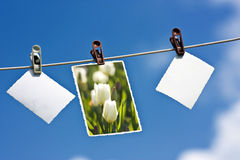 Photos hanging on a rope. Photos with copy space hanging on a clothesline Royalty Free Stock Photos