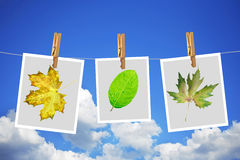 Photos with leafs Stock Photography