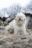 Photos shaggy dog Stock Photo